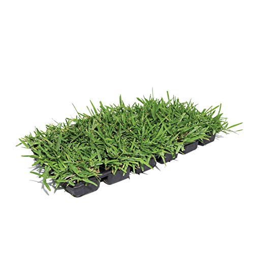 Bethel Farms St. Augustine 3in Natural Grass Plugs 36-Pack