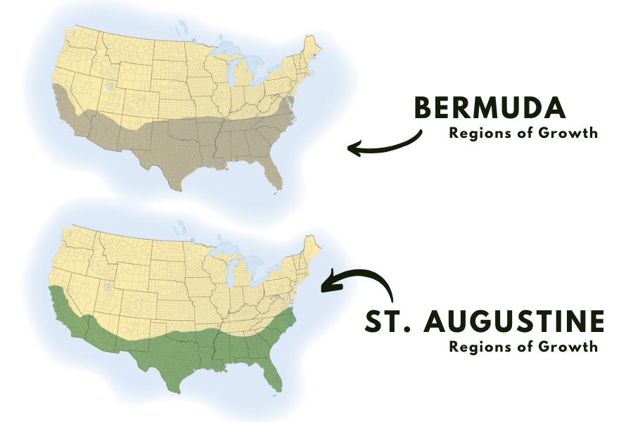 st augustine vs bermuda
