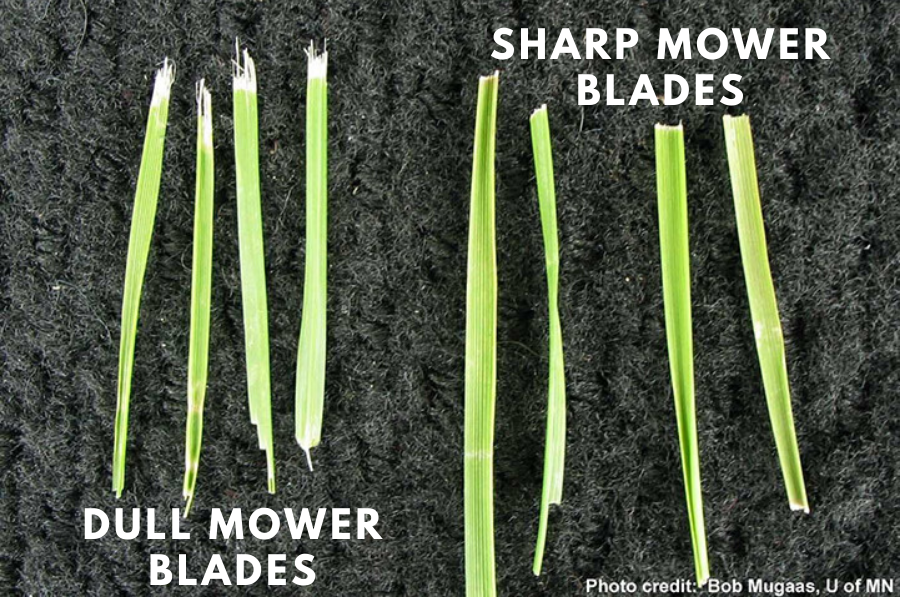 sharp mower blades for a thicker lawn