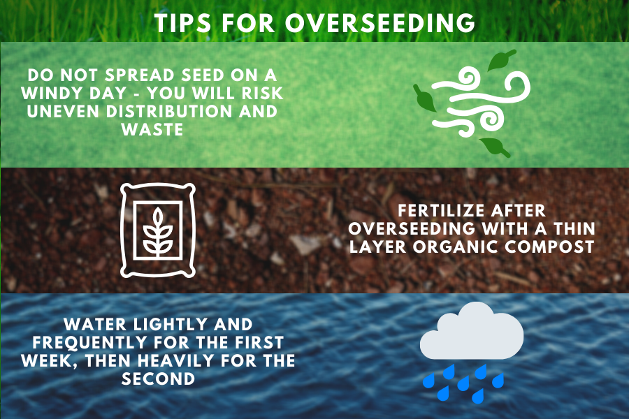 tips for overseeding