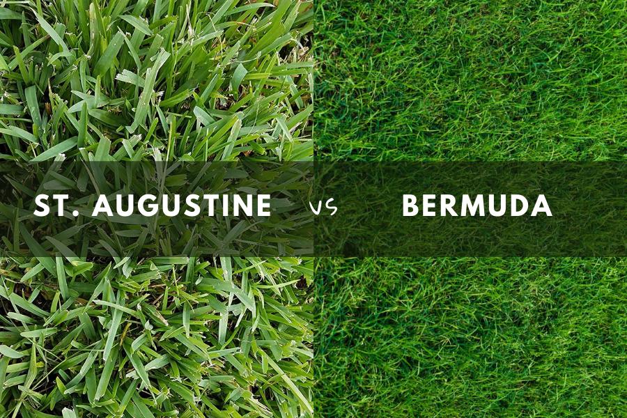 bermuda vs st augustine