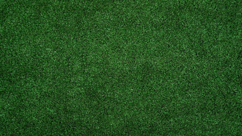 thicker greener lawn