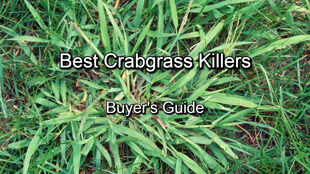 Best crabgrass killers