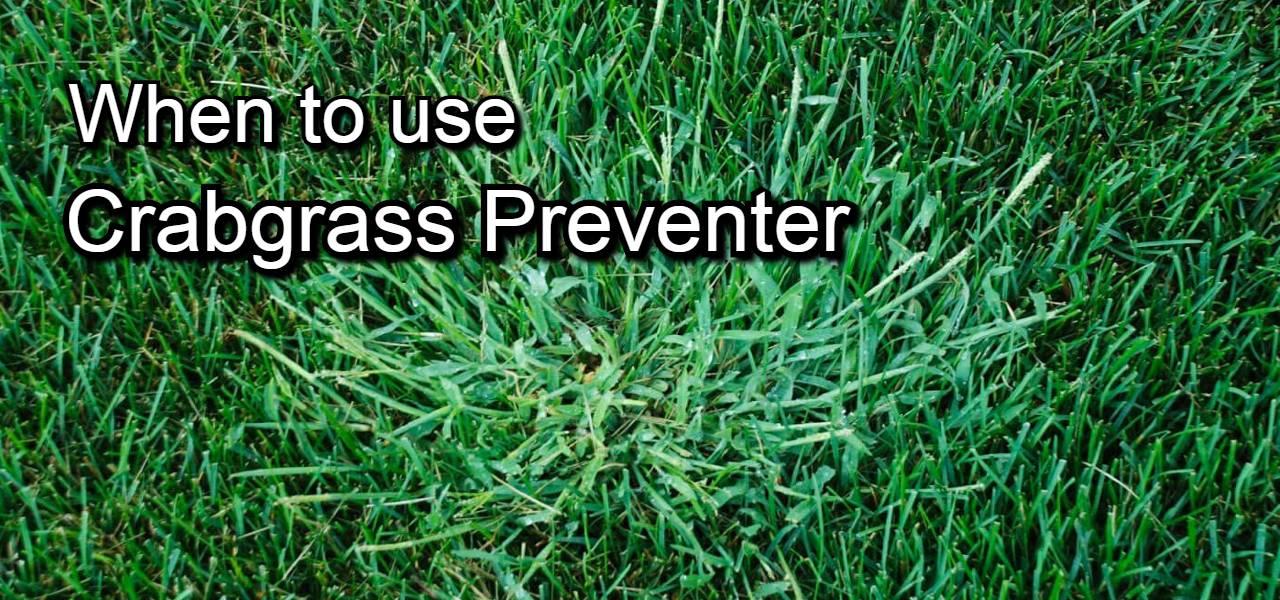 when to use crabgrass preventer