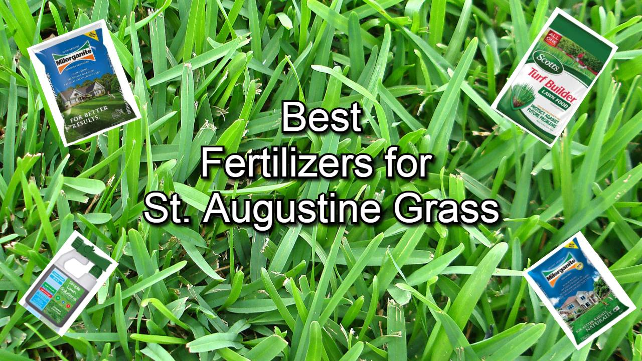 best fertilizers for st. augustine
