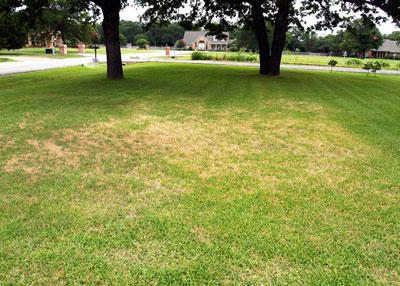 St Augustine Grass Turning Light Green