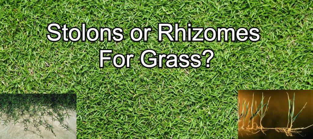 stolons and rhizomes