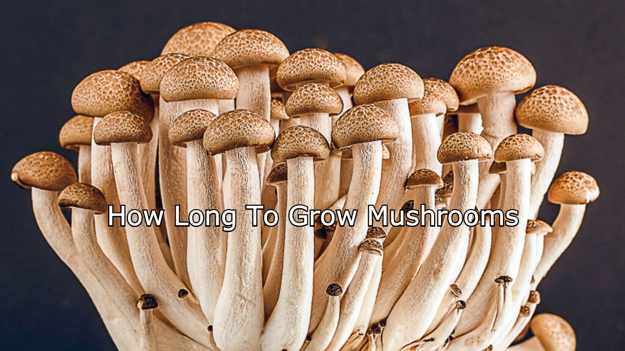 how long does it take to grow mushrooms