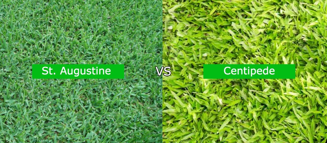 st augustine vs centipede grass