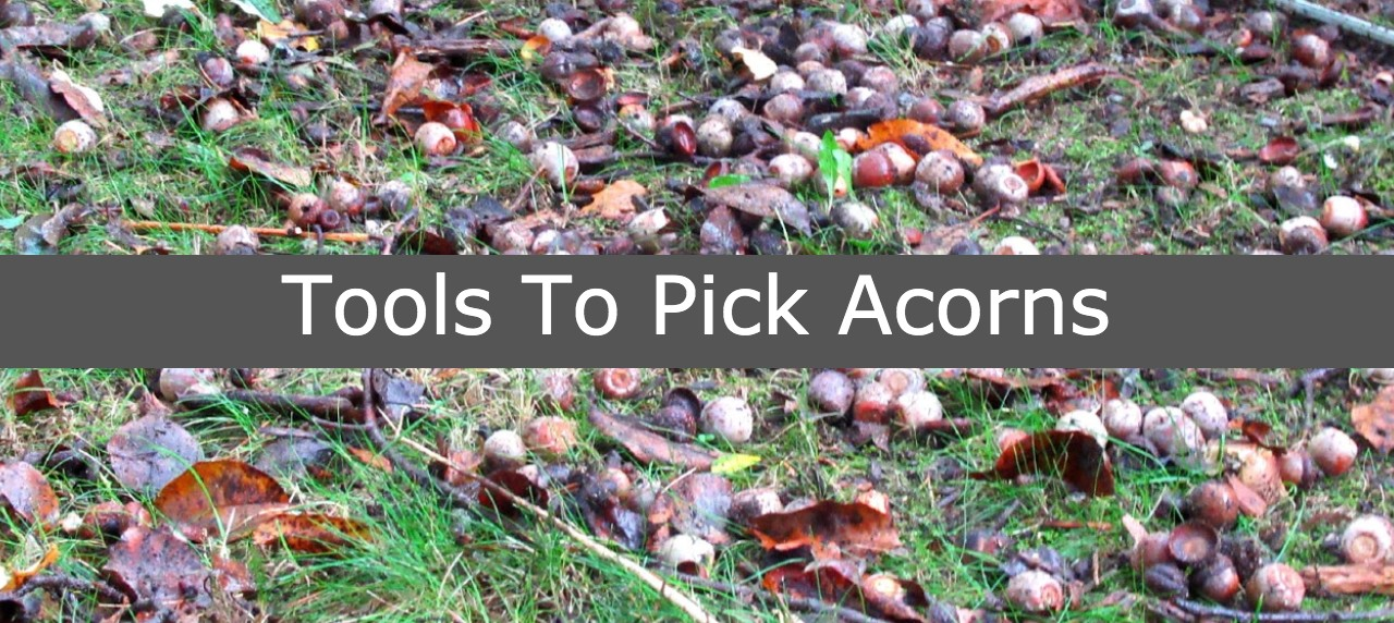 Equipment to pick up acorns in lawn yard