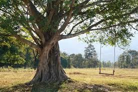 Traditional Tree Swings